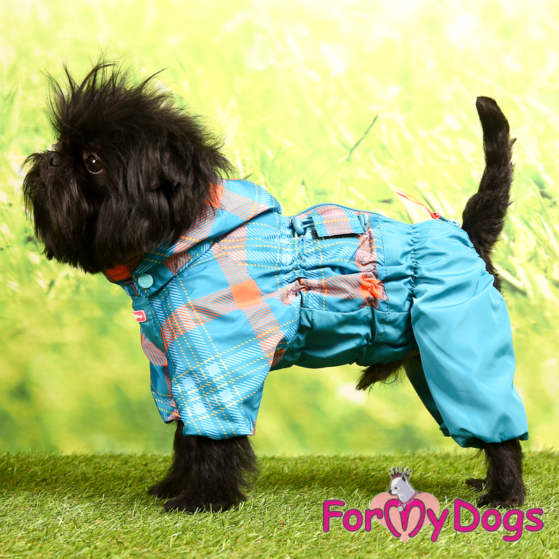 Picture of ForMyDogs Ayoub