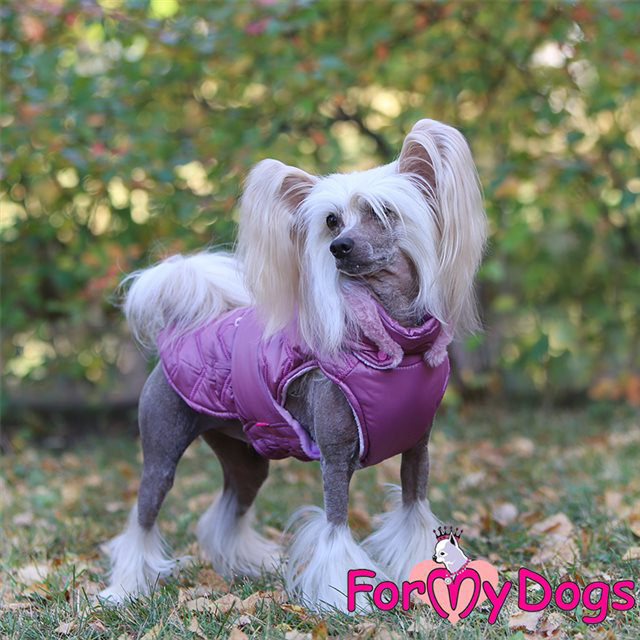 Picture of ForMyDogs  Angelina