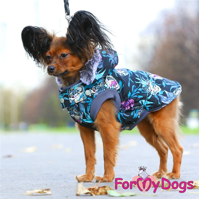 Picture of ForMyDogs  Trendy