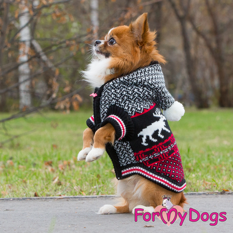 Picture of ForMyDogs  Arjan