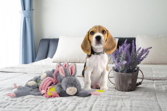 Afbeeldingen van Bunny Puppy Crunchy Rope