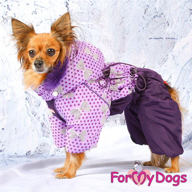 Picture of ForMyDogs Nieke