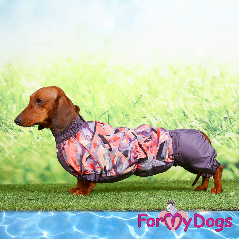 Picture of ForMyDogs Winnie