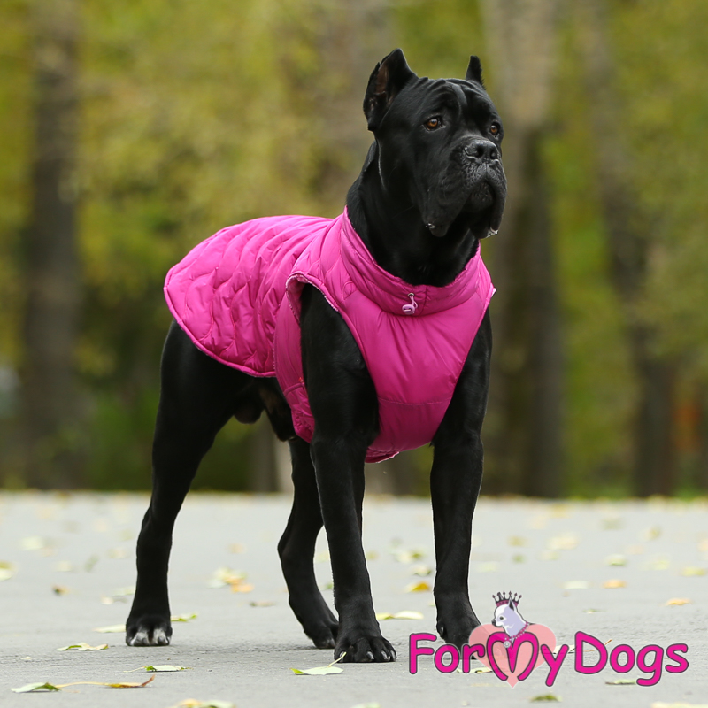 Picture of ForMyDogs Ebru