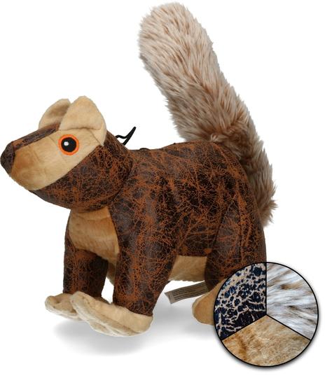 Picture of Elegant Squirrel Bruin