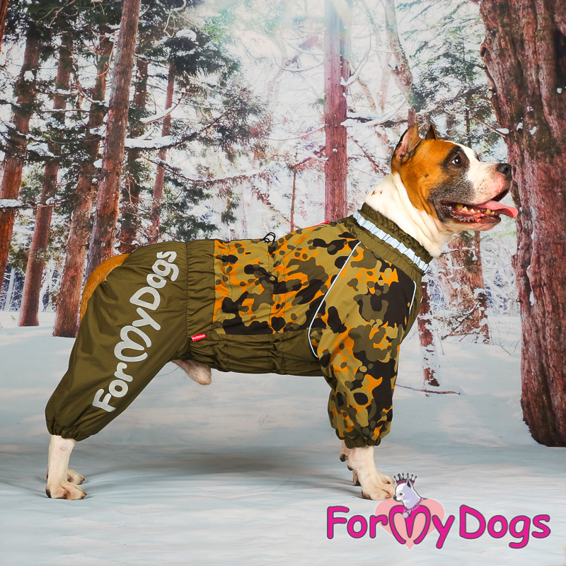 Picture of ForMyDogs Andy